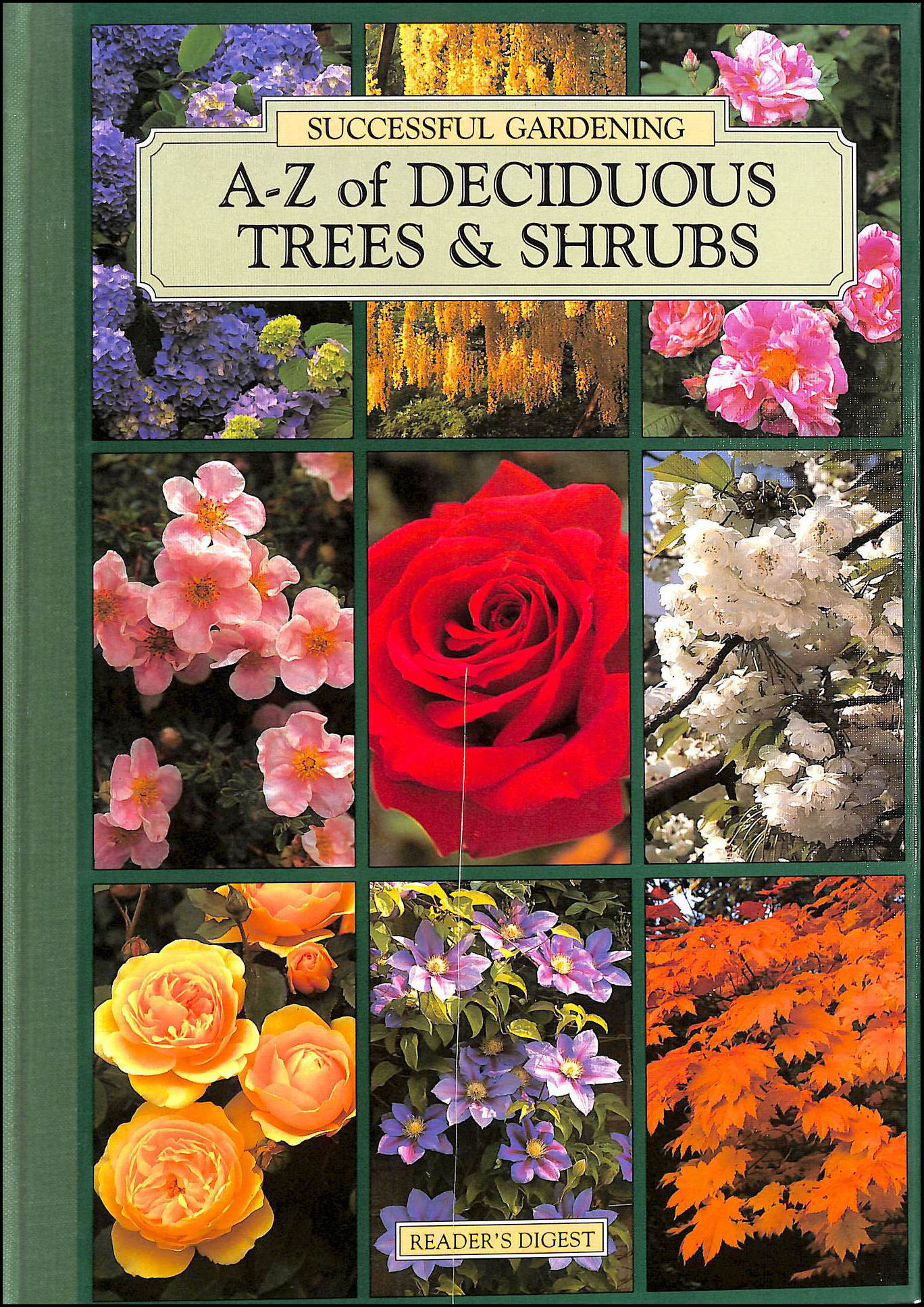 A-Z of deciduous trees & shrubs