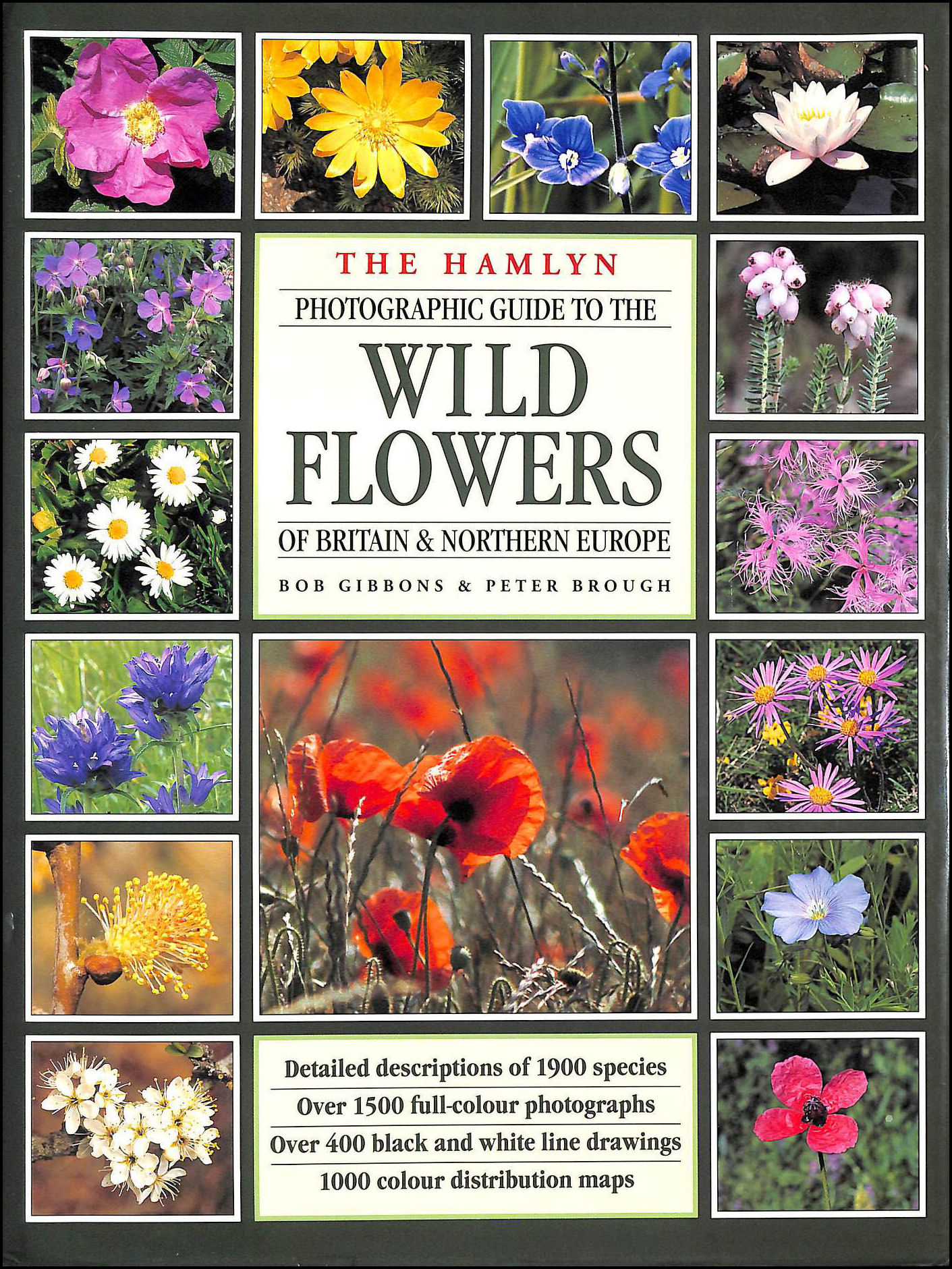 Image for Wild Flowers of Britain and Europe