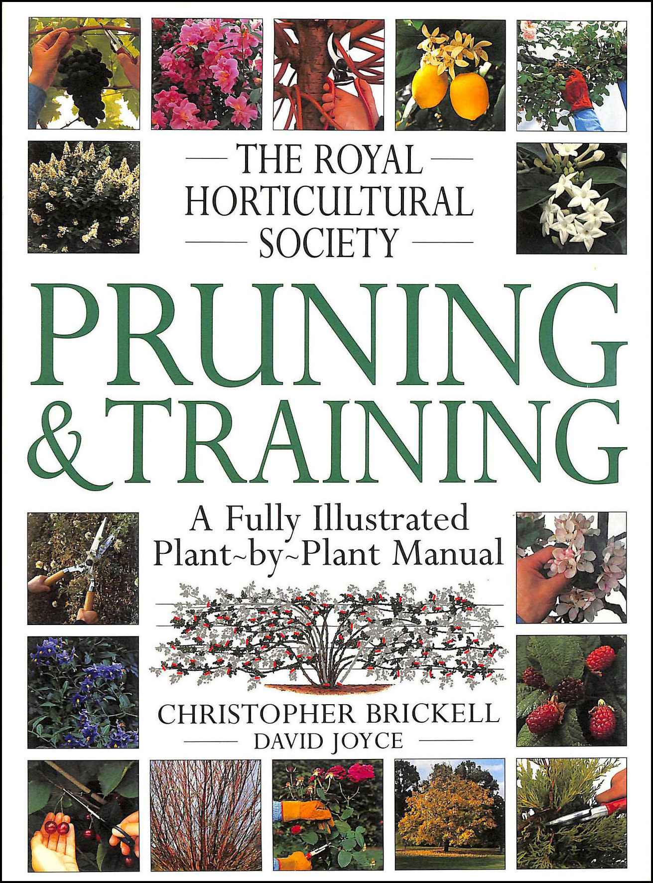 Image for The Royal Horticultural Society Pruning and Training (RHS)