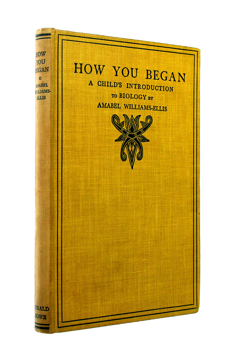 Image for How You Began: A Child`s Introduction to Biology