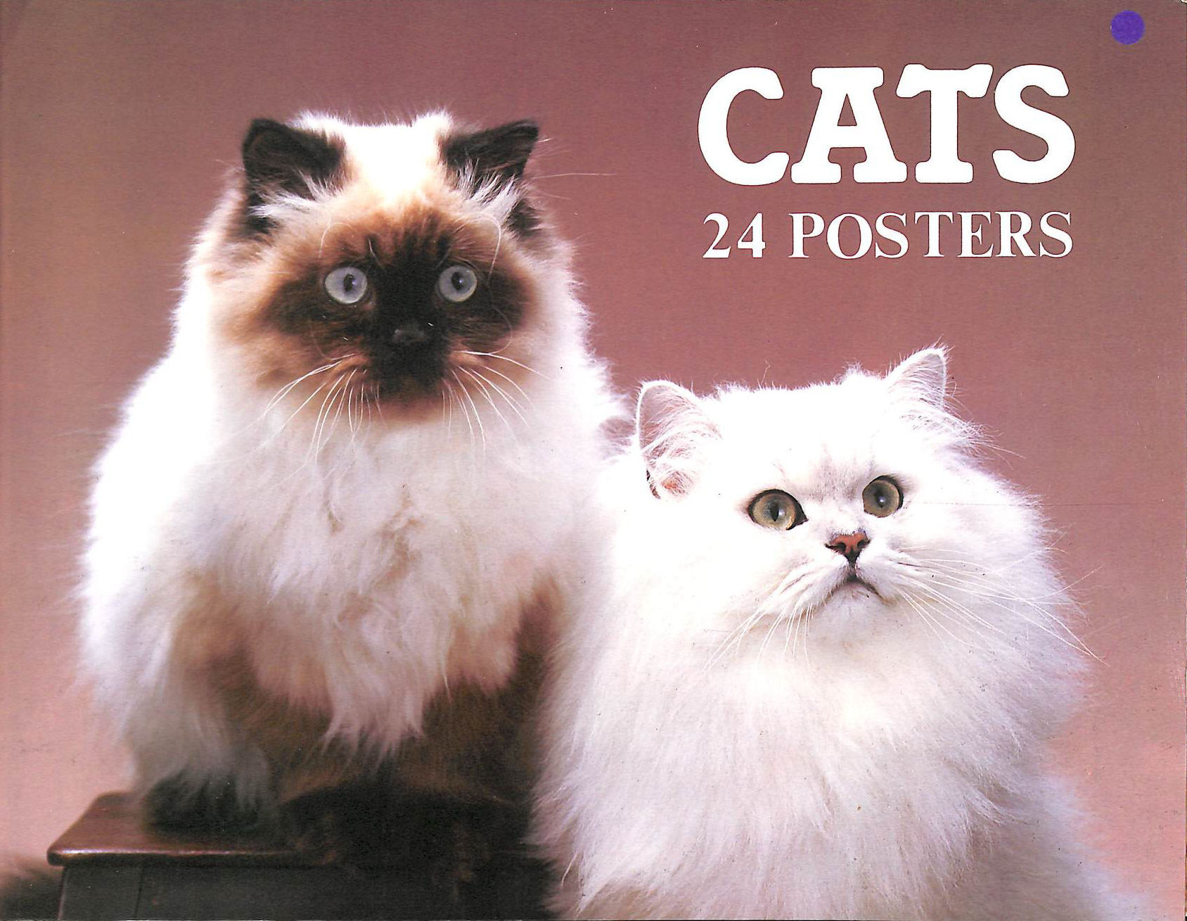 Cats, 24 Posters, Colour Library Books Ltd
