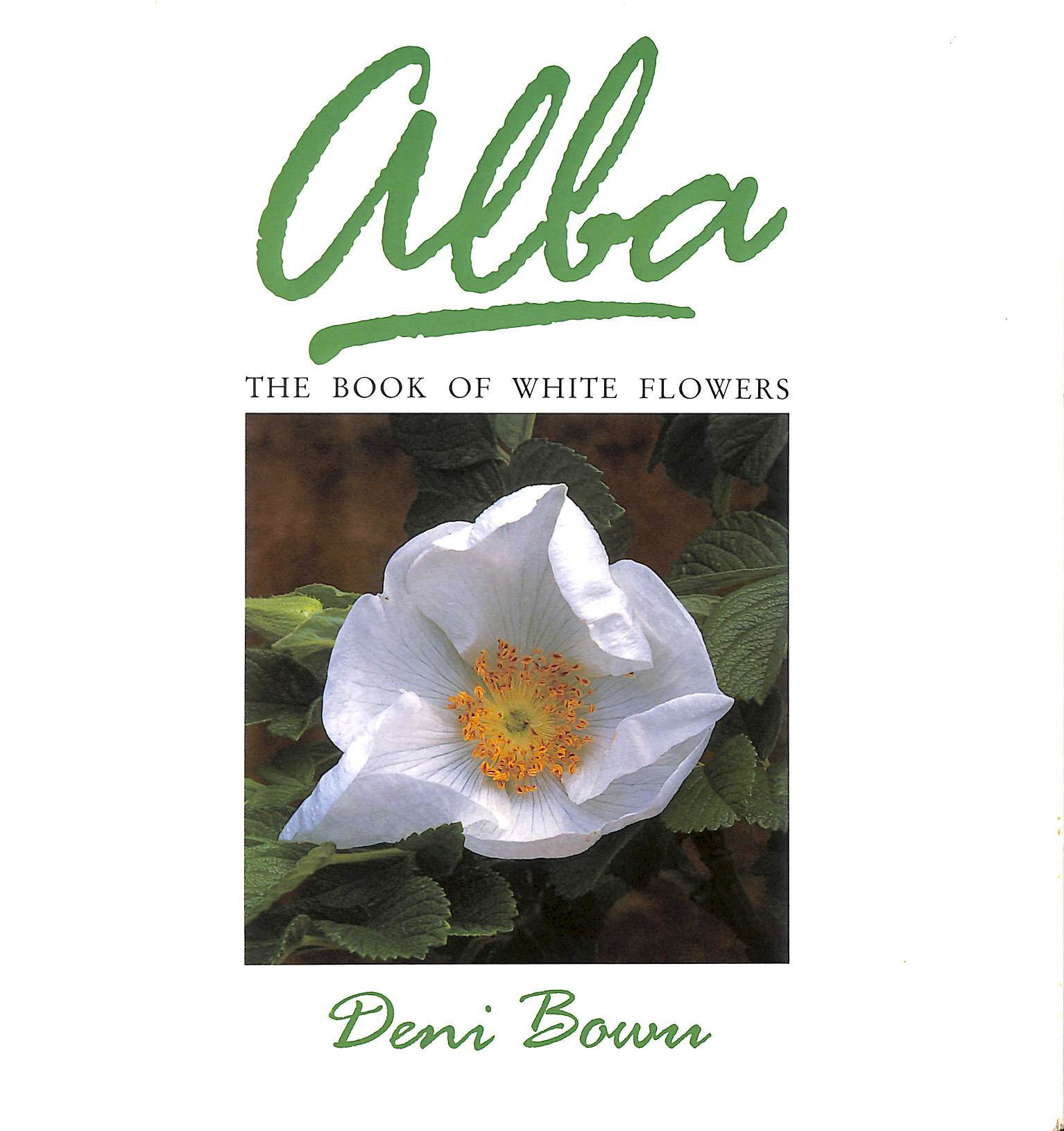 Image for Alba: The Book of White Flowers