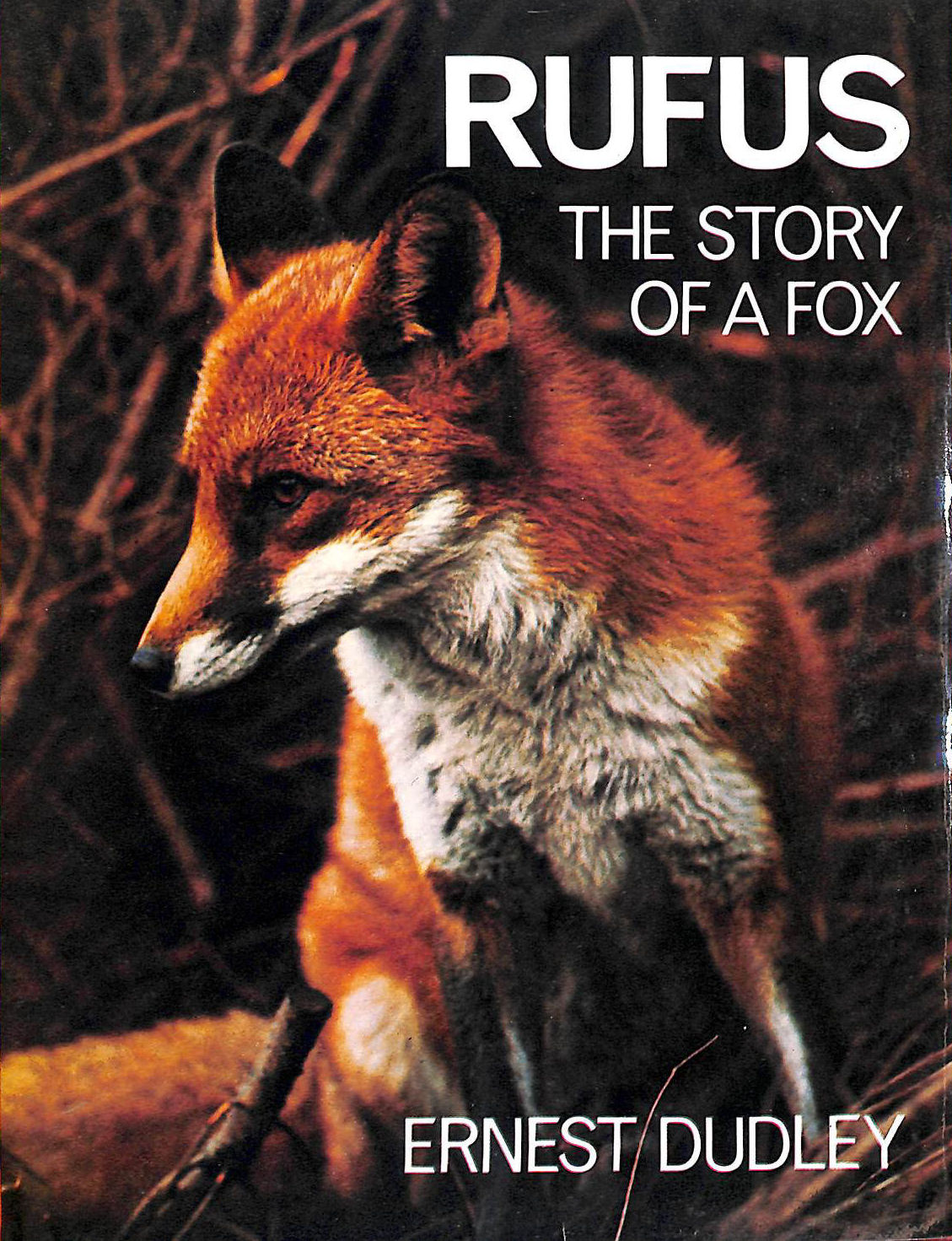 Image for Rufus: Story of a Fox