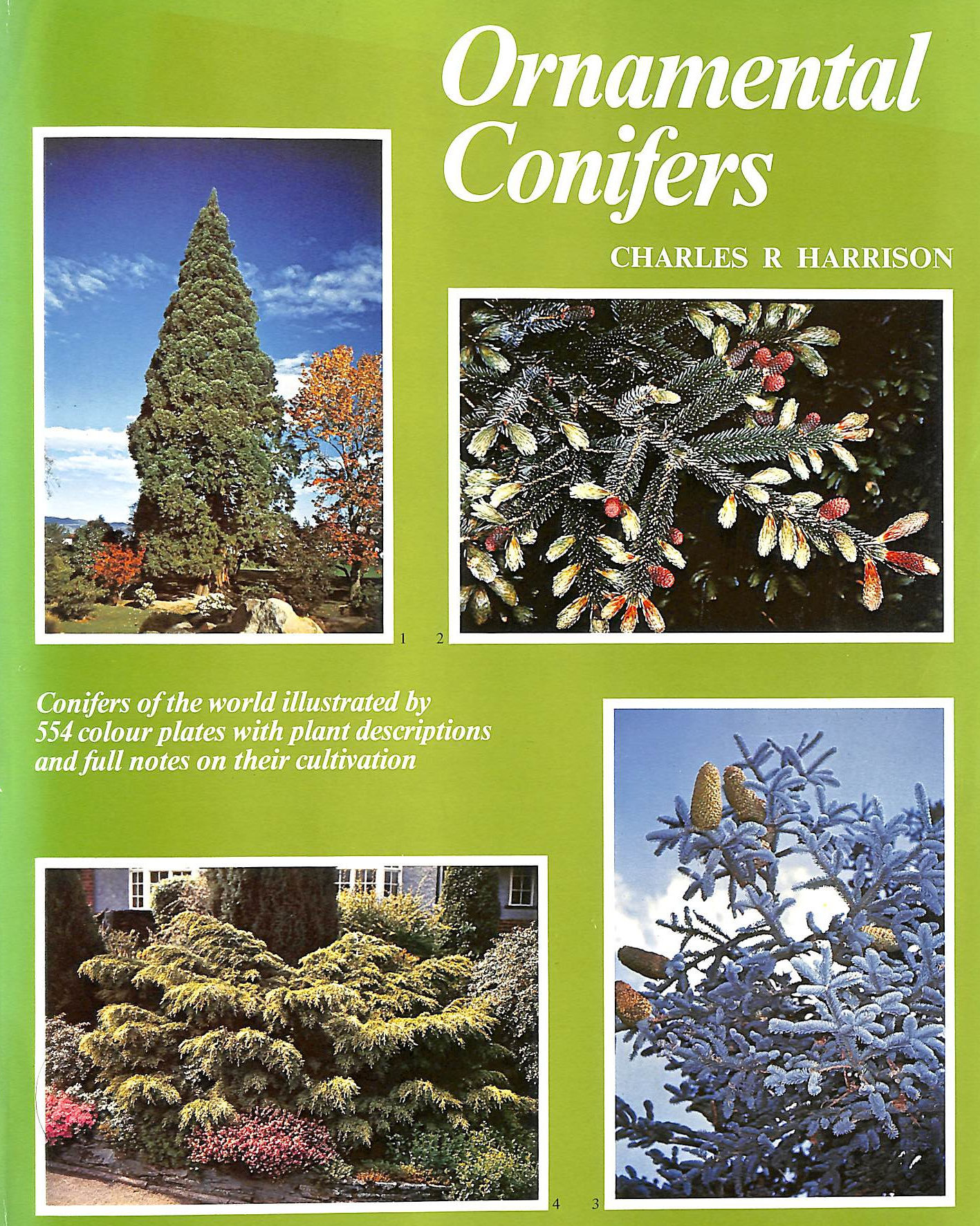 Image for Ornamental Conifers