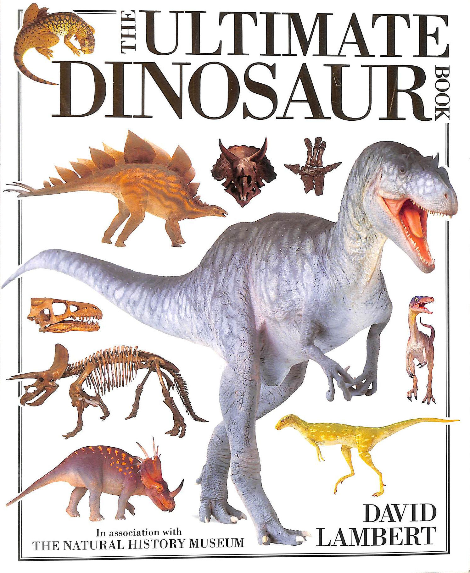 Image for The Ultimate Dinosaur Book