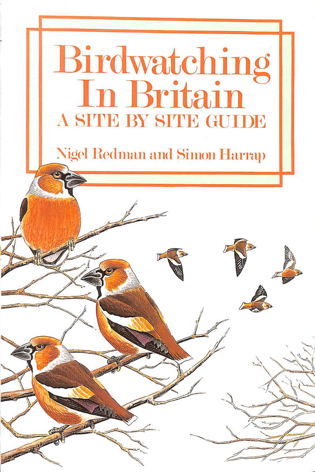 Image for Birdwatching in Britain: A Site by Site Guide
