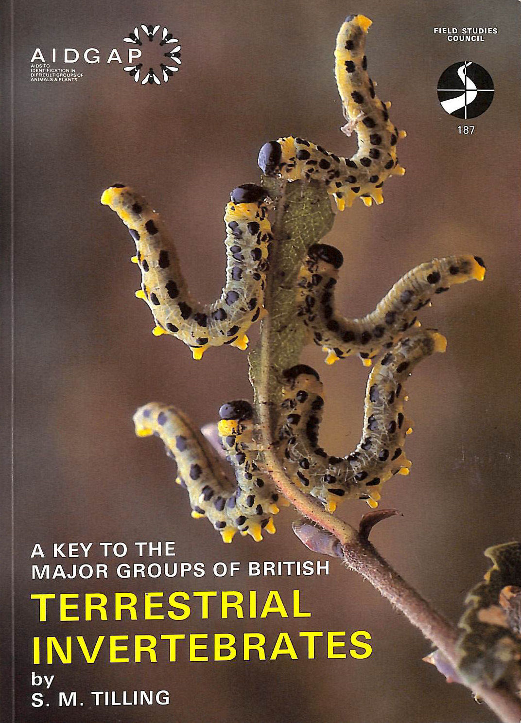 A Key to the Major Groups of British Terrestrial Invertebrates (Field Studies Council Publications)