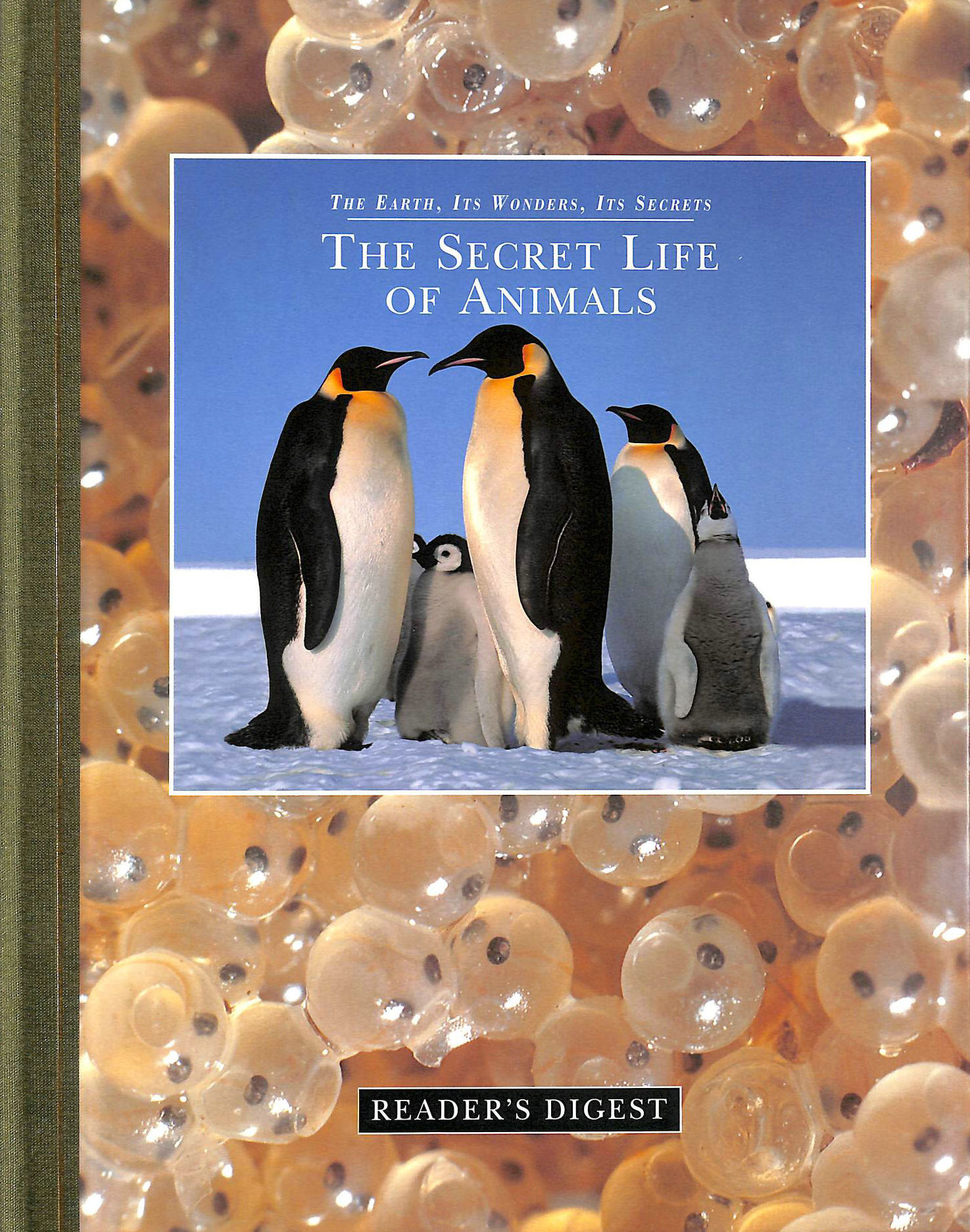 Image for The secret life of animals (The earth, its wonders, its secrets)