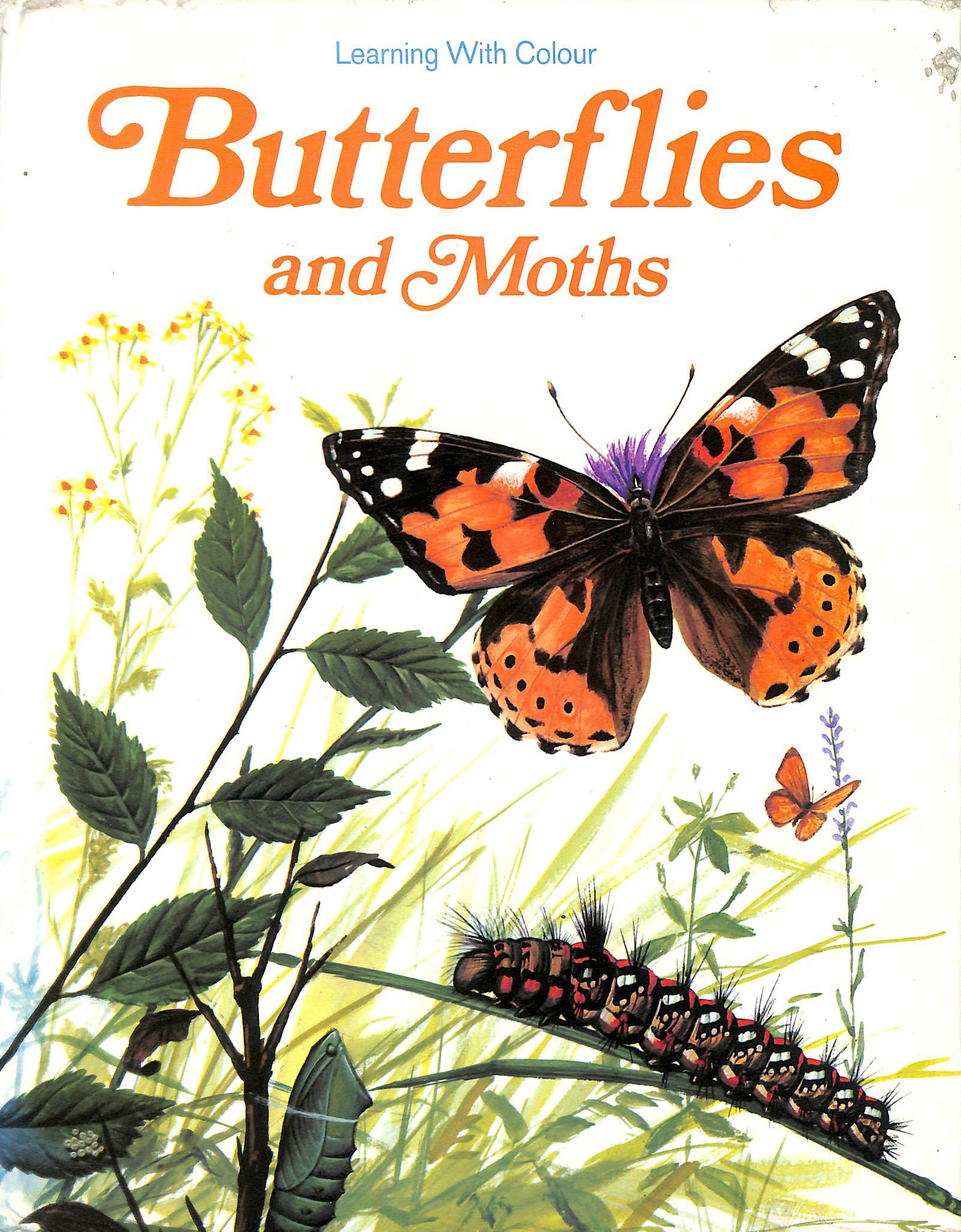 Image for Butterflies and Moths (Learning with Colour)