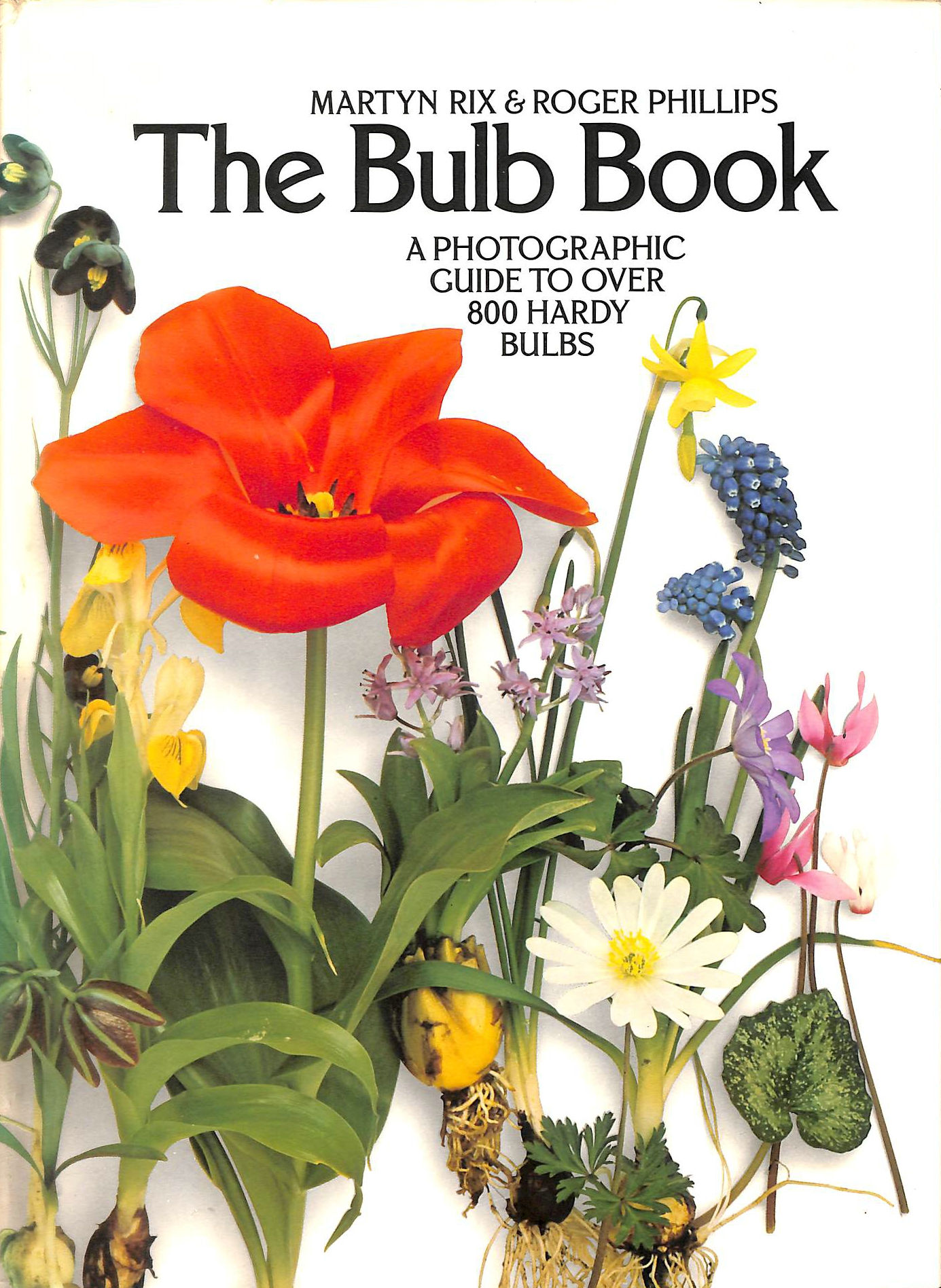 Image for Bulb Book: A Photographic Guide to Over 800 Hardy Bulbs