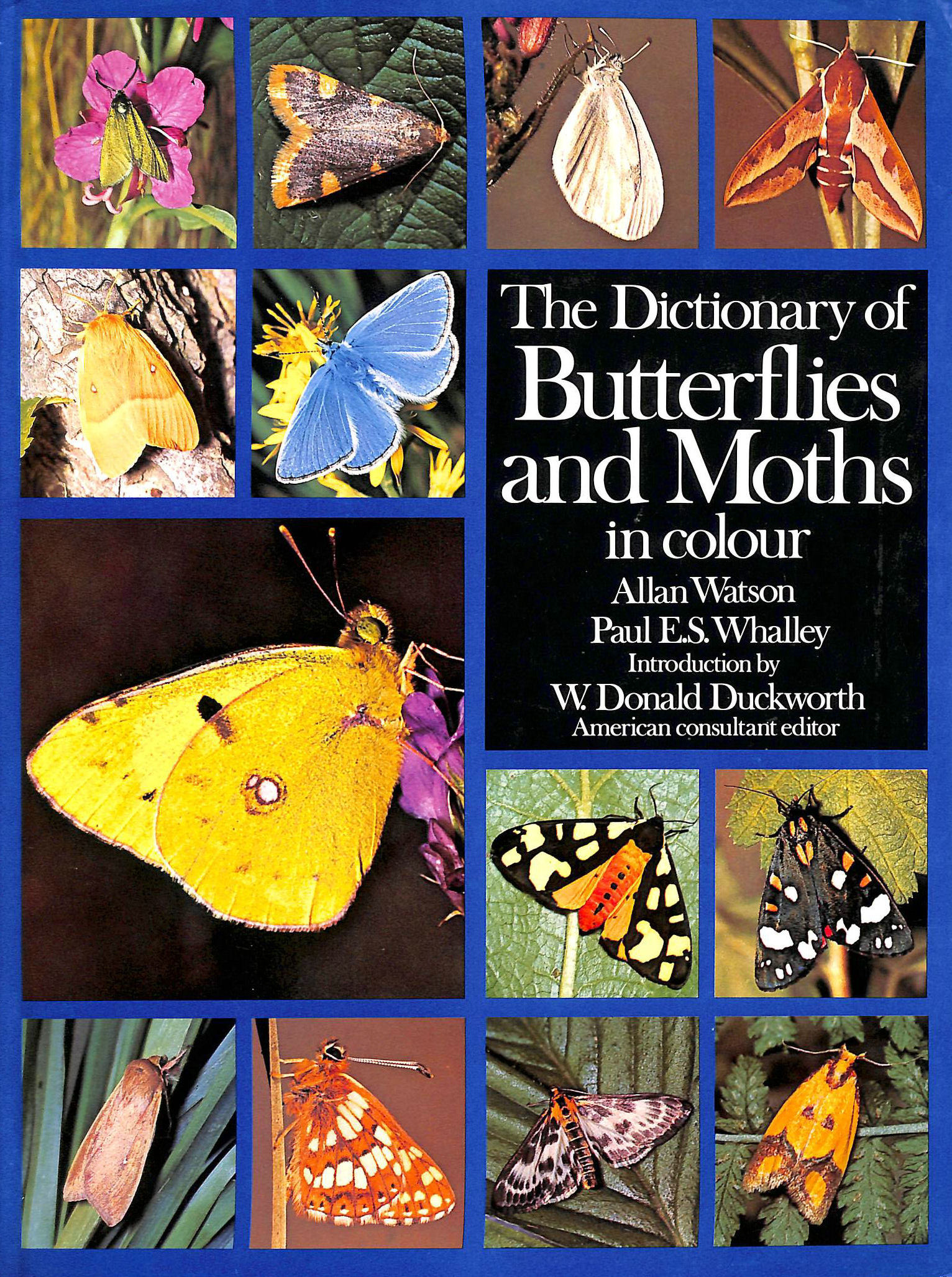 Image for Dictionary of Butterflies and Moths