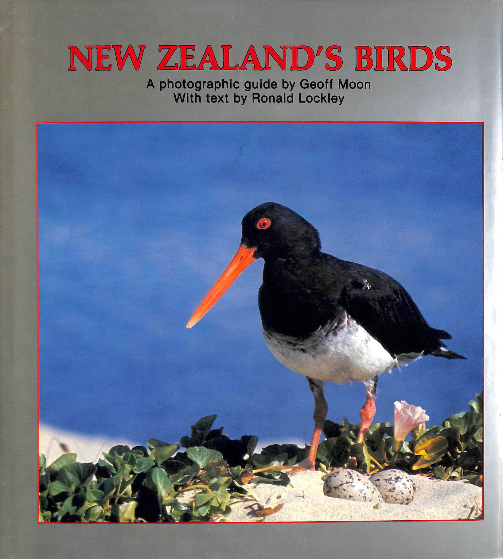 Image for New Zealand's Birds: A Photographic Guide