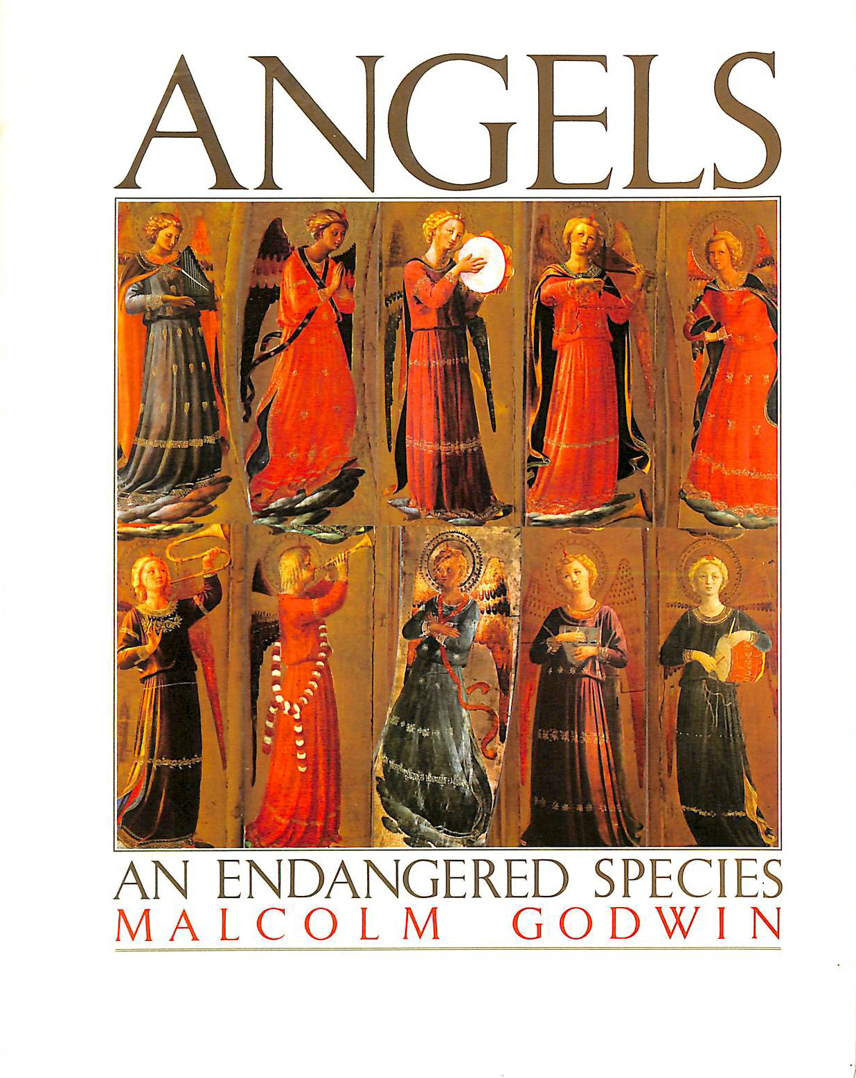 Image for Angels: An Endangered Species