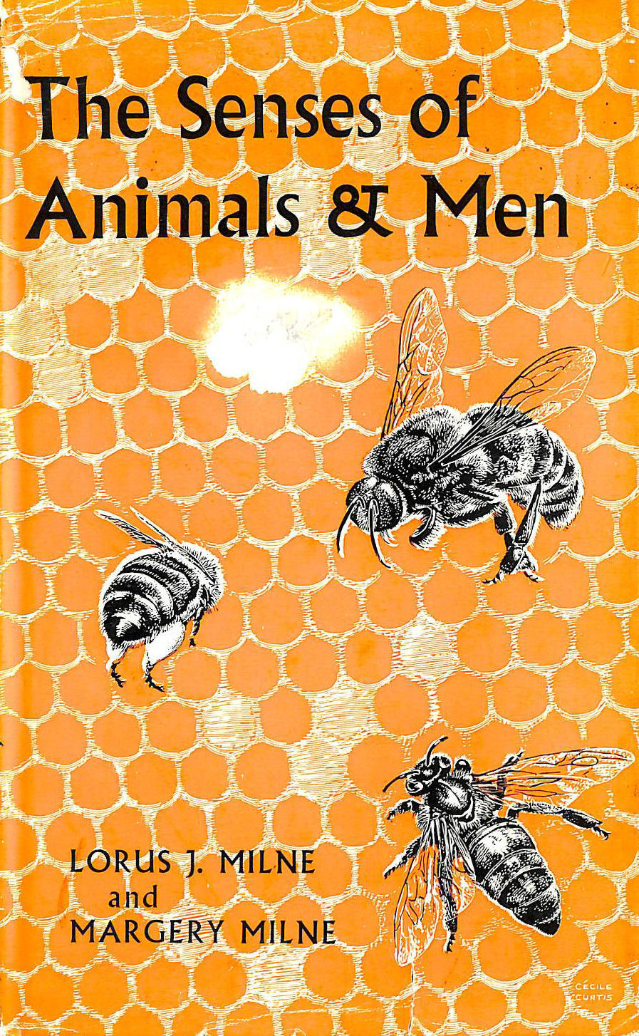 Image for THE SENSES OF ANIMALS AND MEN.