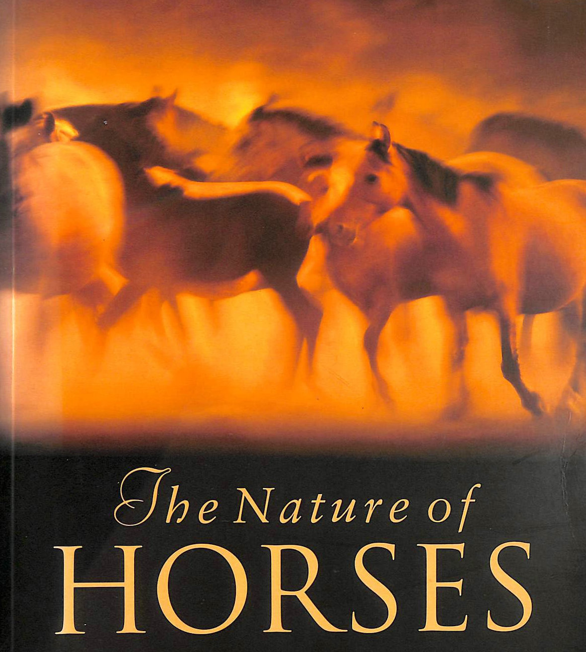 Image for The Nature of Horses: Their Evolution, Intelligence and Behaviour