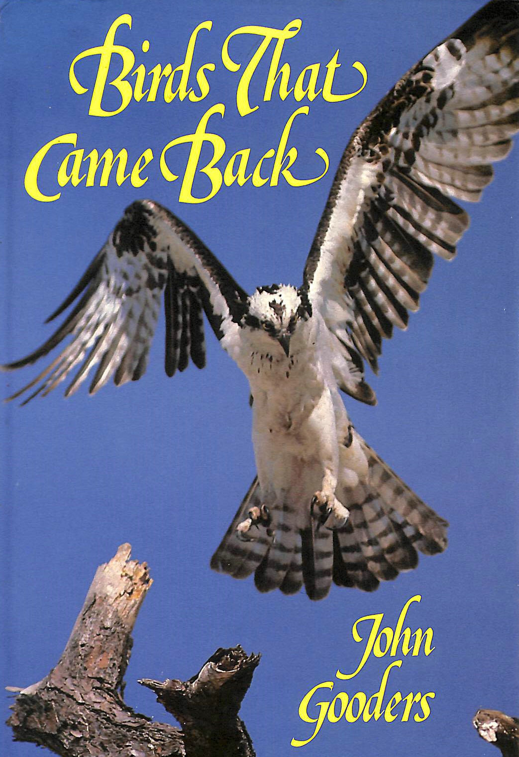 Image for Birds That Came Back