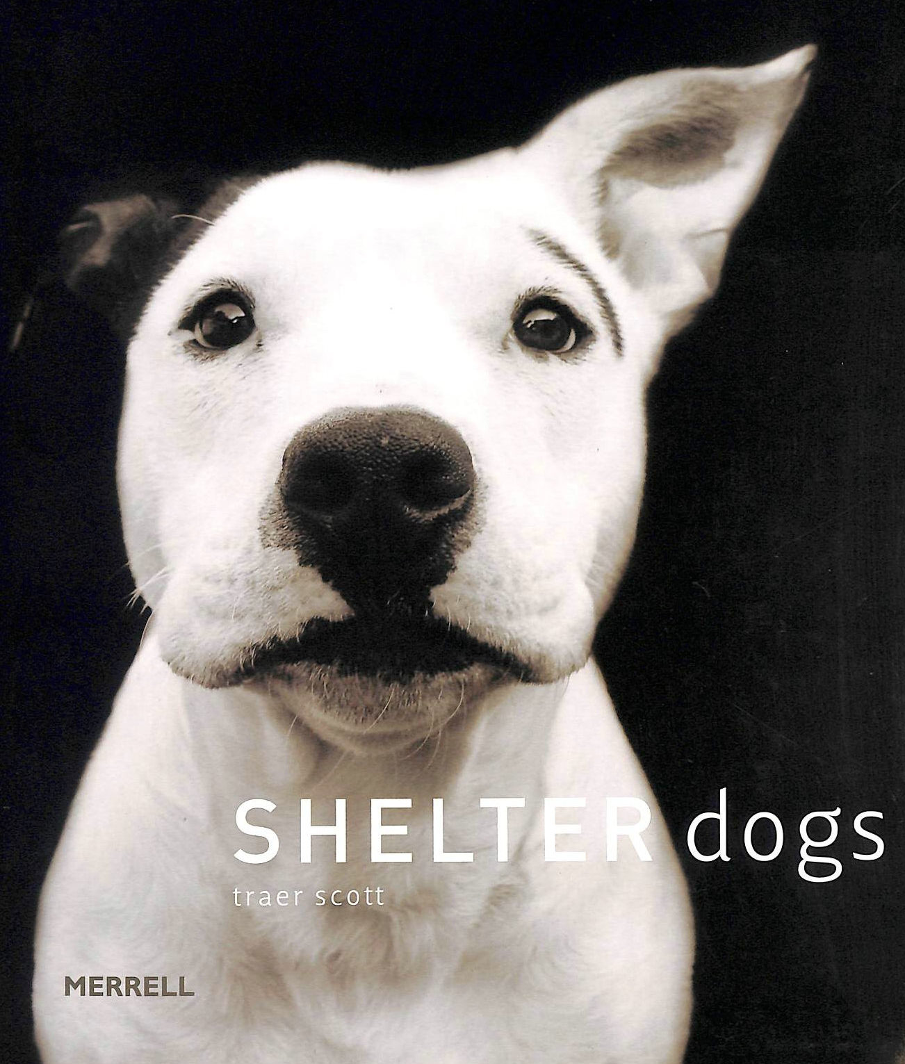 Image for Shelter Dogs