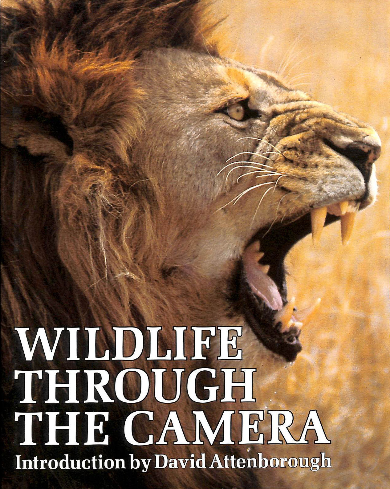 Image for Wildlife Through The Camera