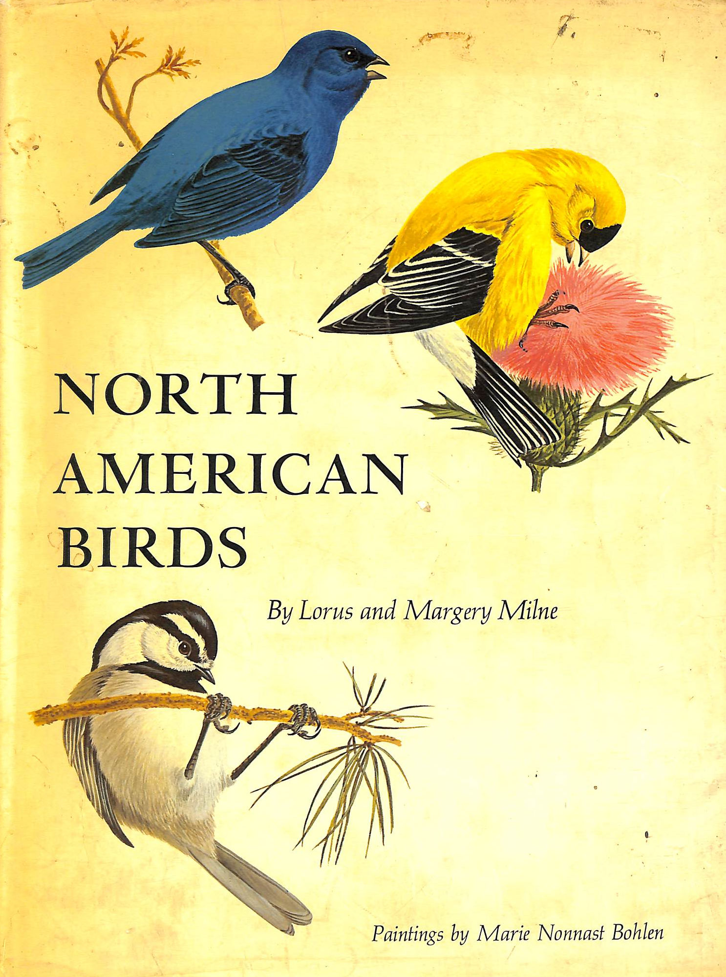 Image for North American birds