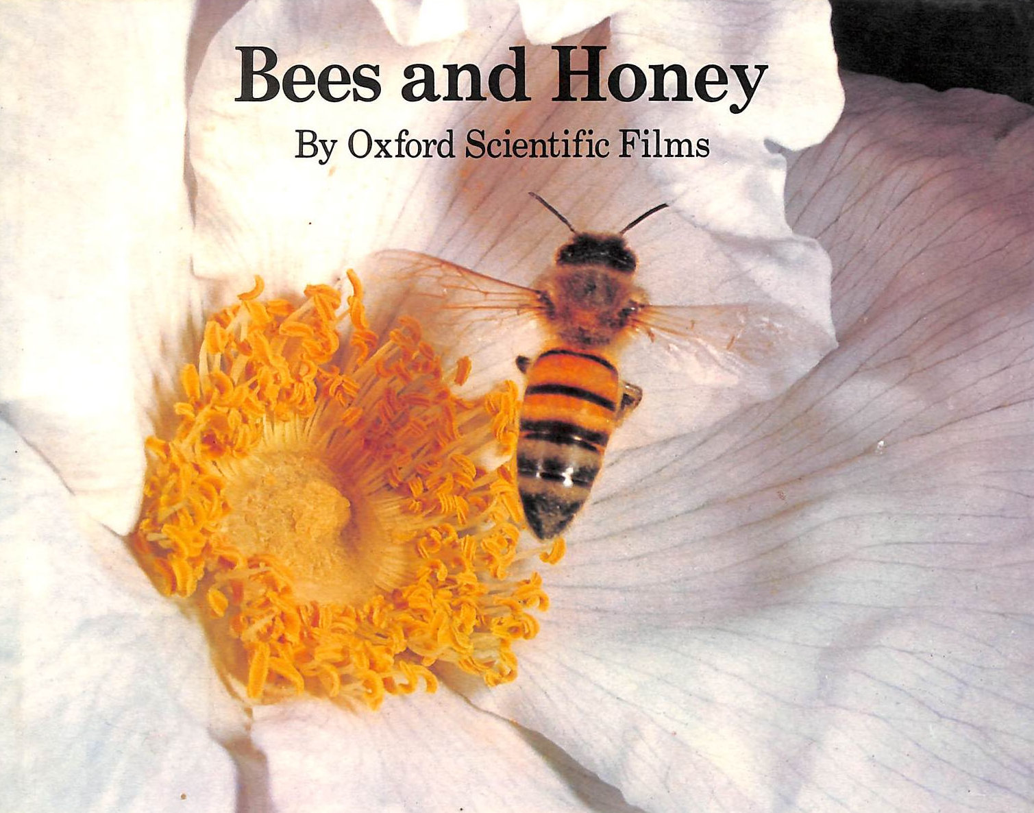 Image for Bees and Honey
