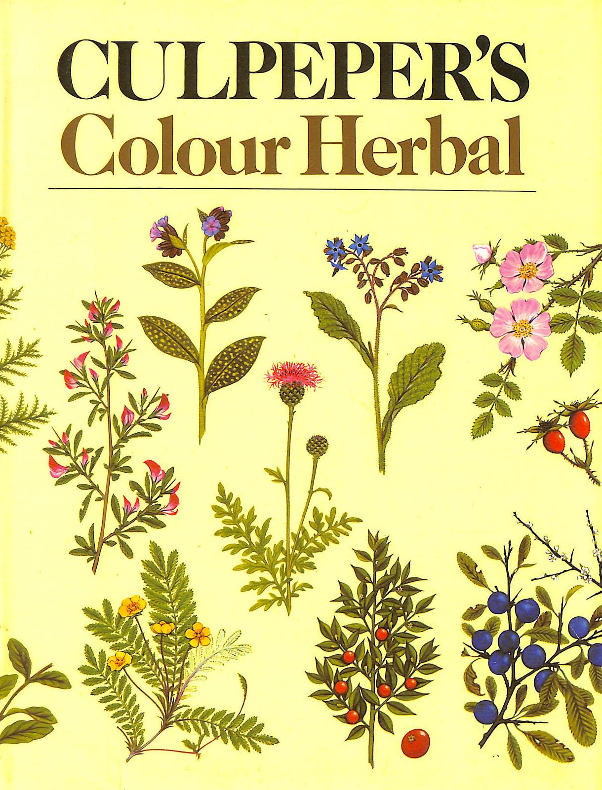 Image for Culpeper's Colour Herbal by Nicholas Culpeper (1983-03-14)