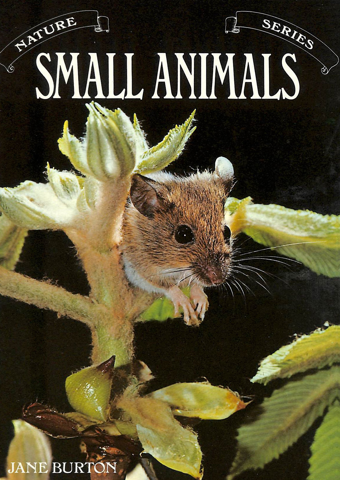 Image for Small Animals