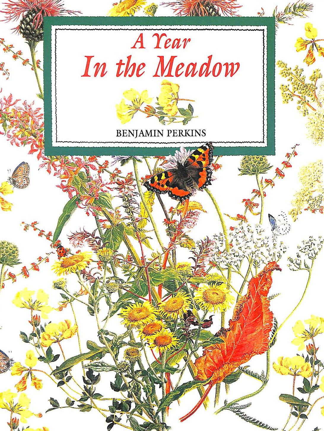 Image for A Year in the Meadow