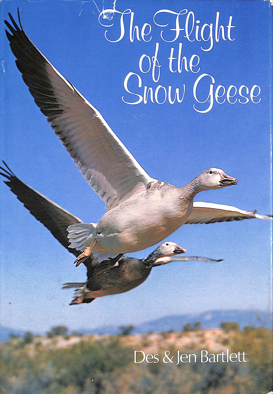 Image for Flight Of The Snow Geese, The