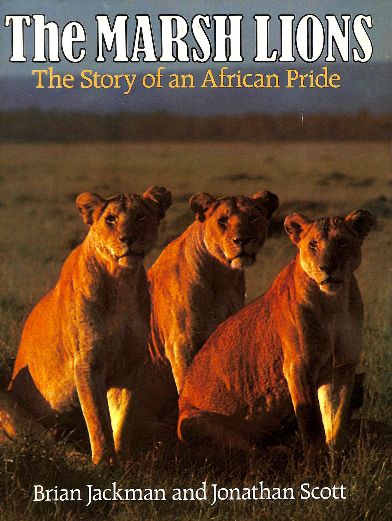 Image for The Marsh Lions: The Story Of An African Pride
