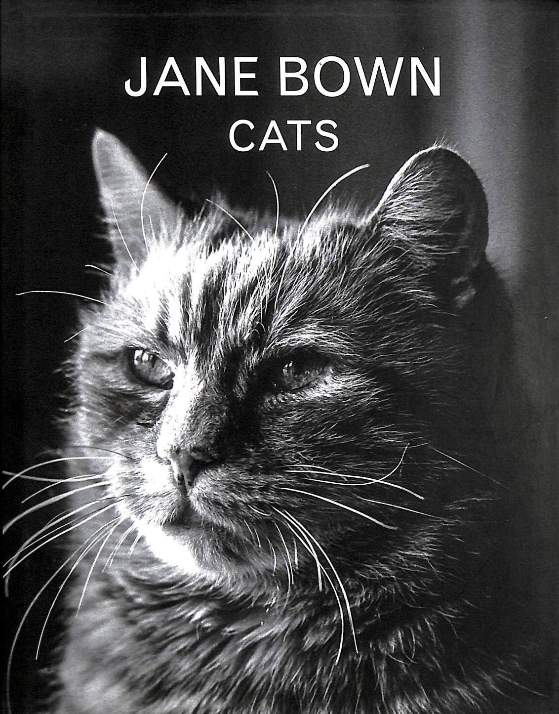 Image for Jane Bown: Cats