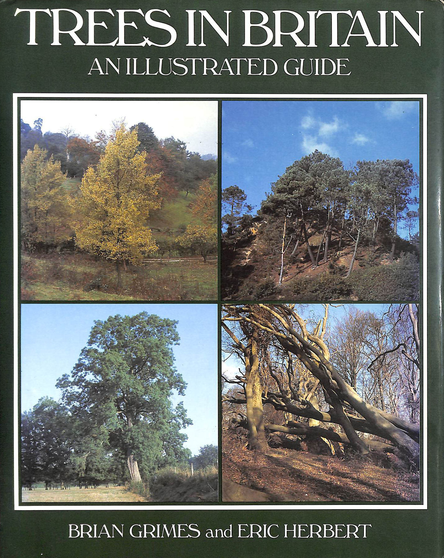 Image for Trees In Britain: An Illustrated Guide