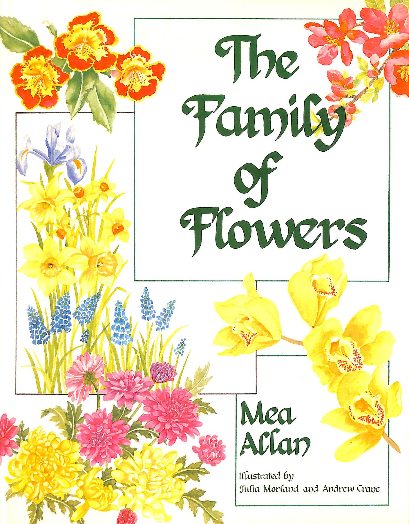Image for The Family Of Flowers