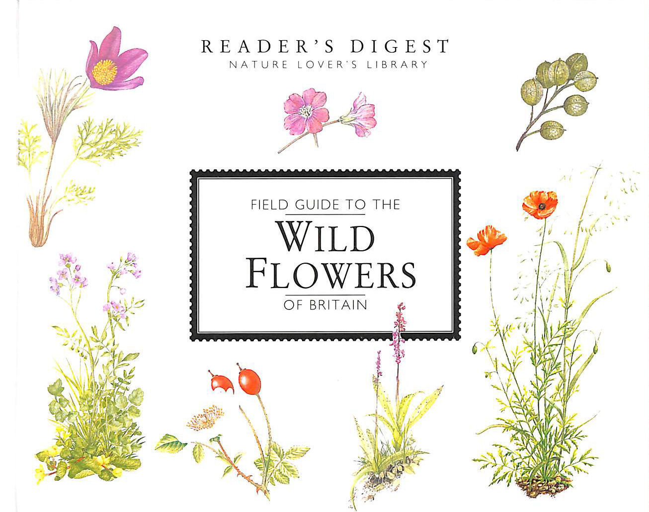 Image for Field Guide To The Wild Flowers Of Britain