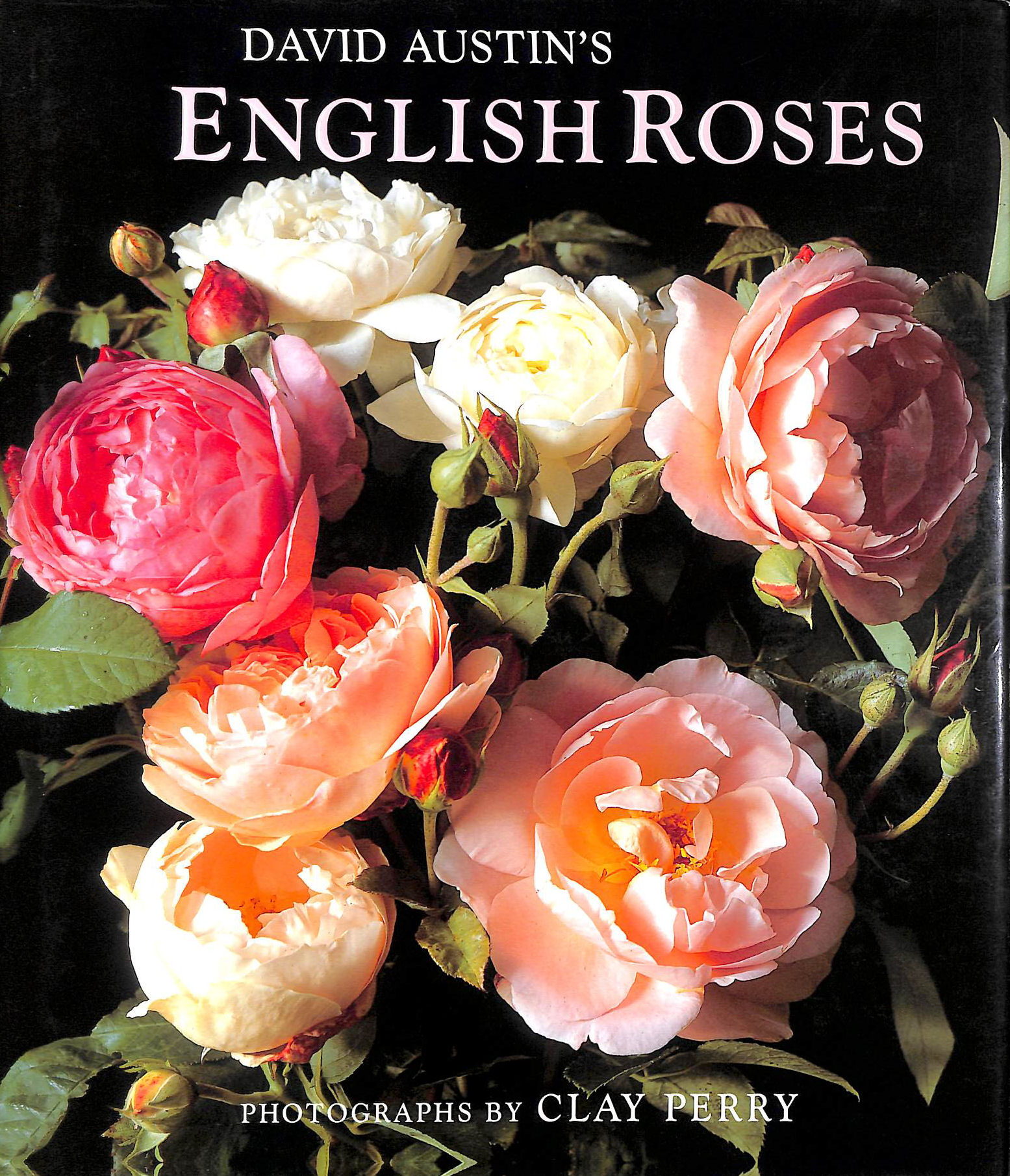 Image for David Austin's English Roses