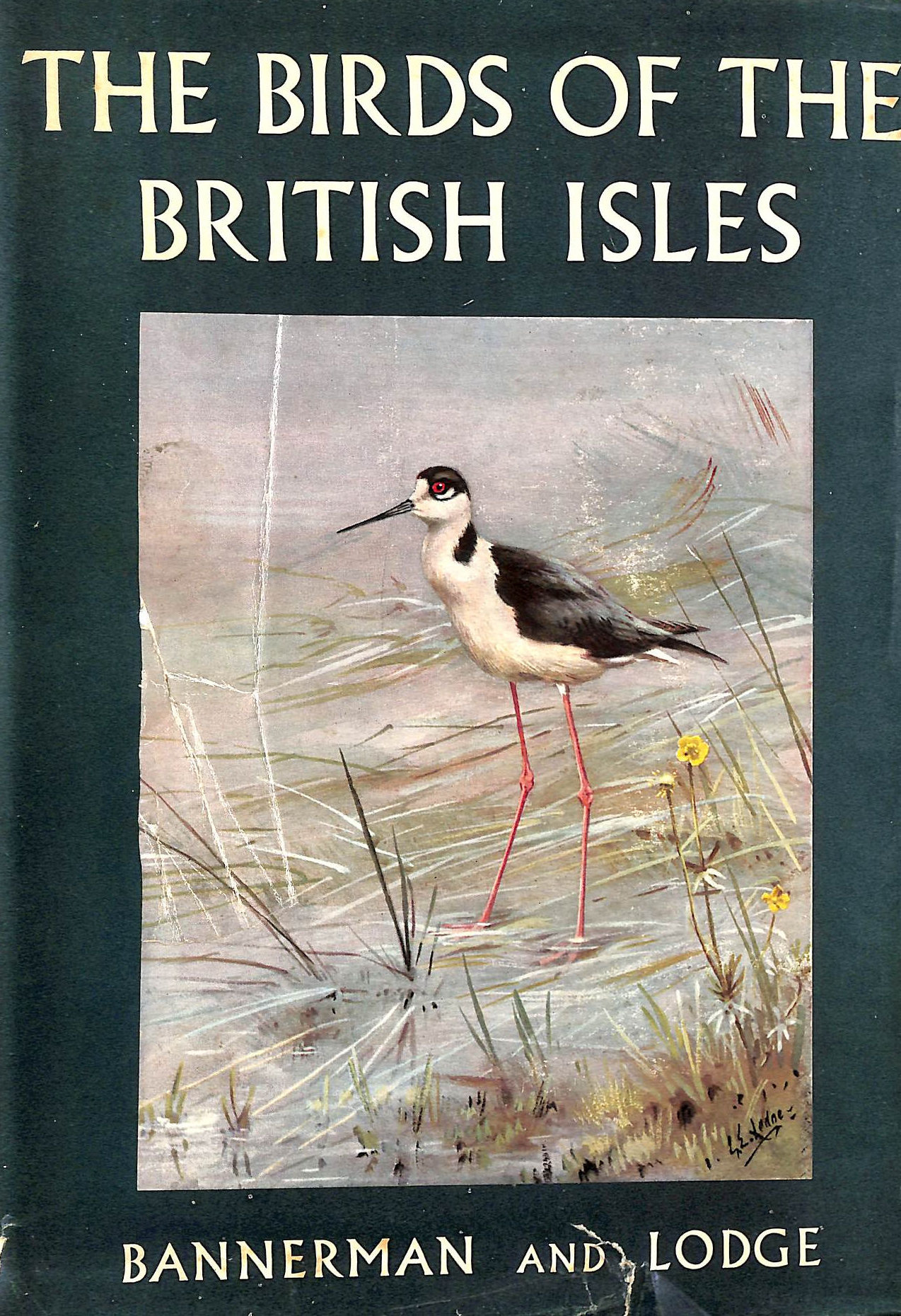 Image for The Birds Of The British Isles: Volume X (10)