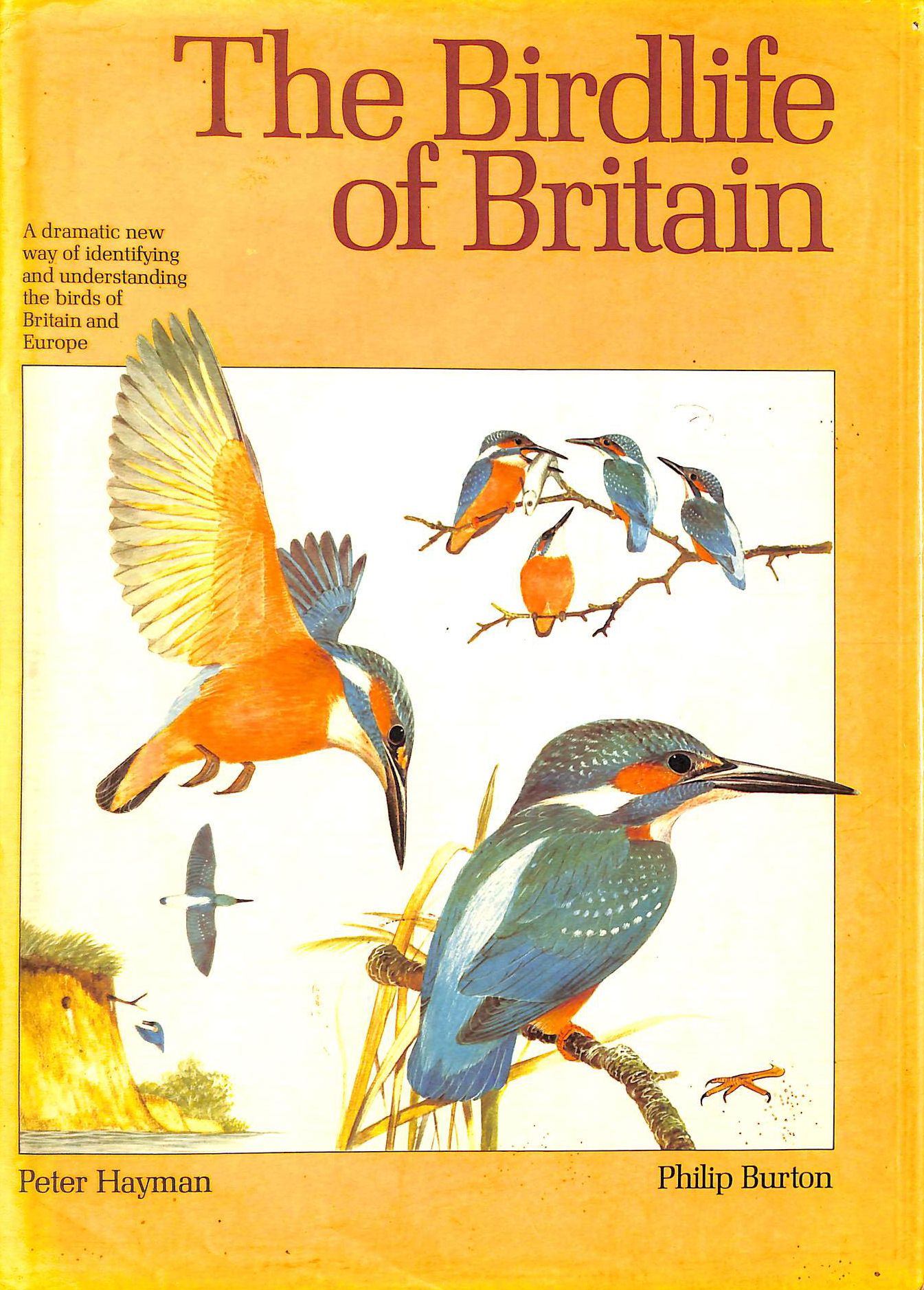 Image for Bird Life Of Britain