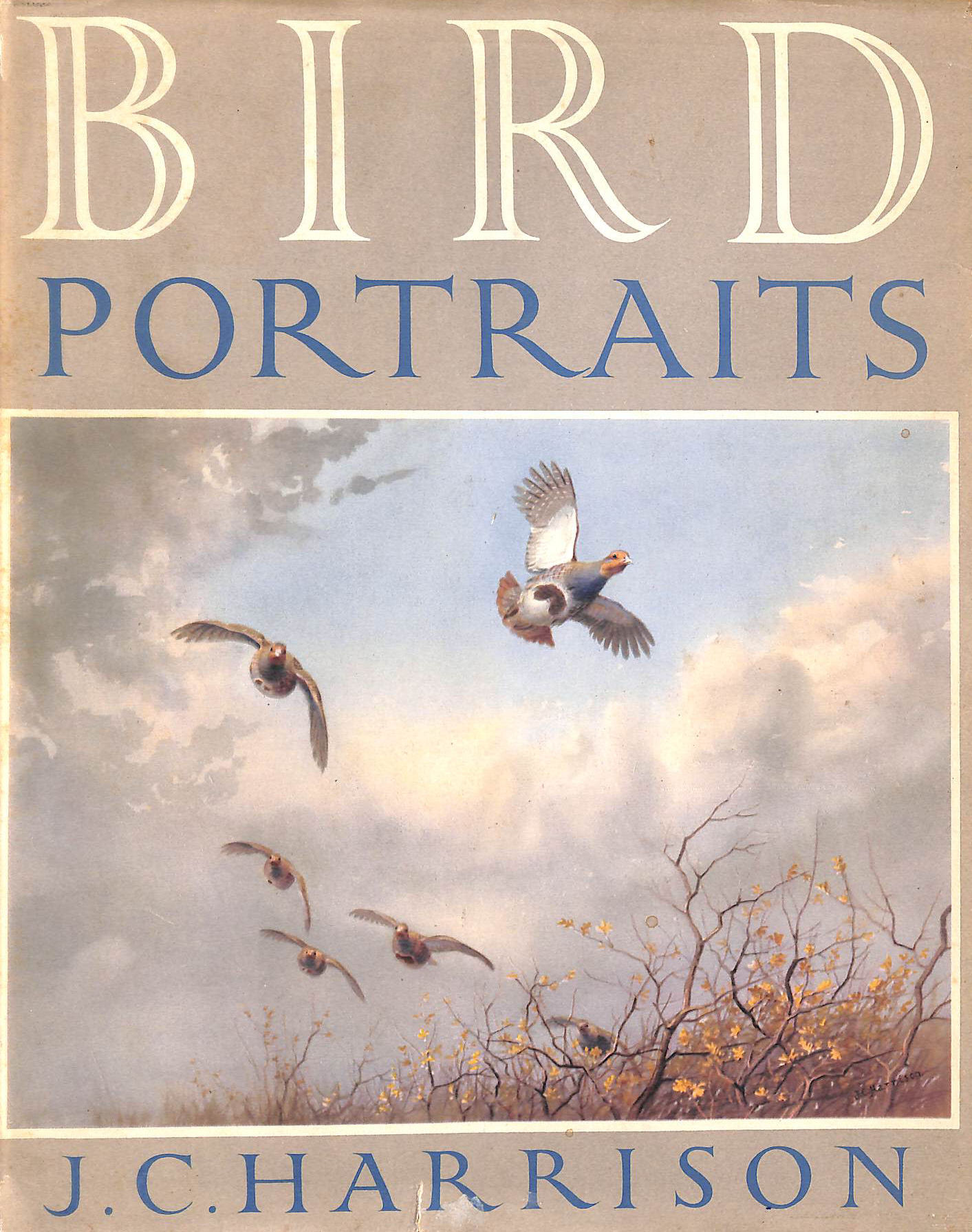 Image for Bird Portraits A Book Of Sketches And Paintings