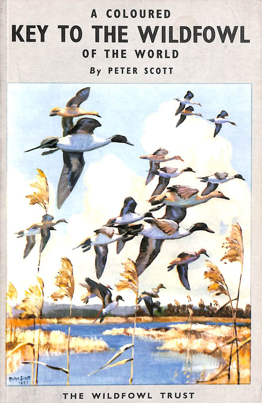 Image for A Coloured Key To The Wildfowl Of The World.