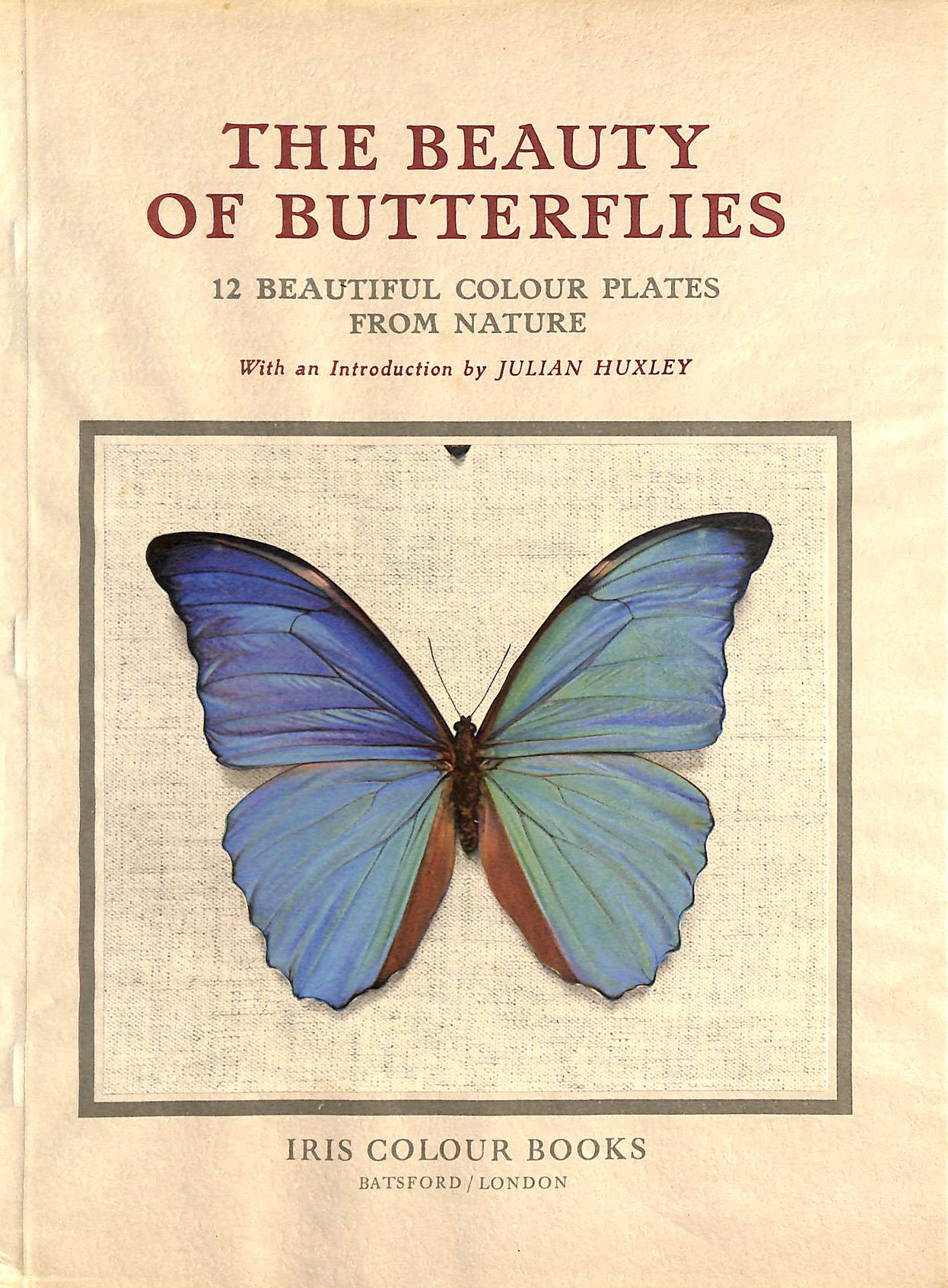 Image for Beauty Of Butterflies