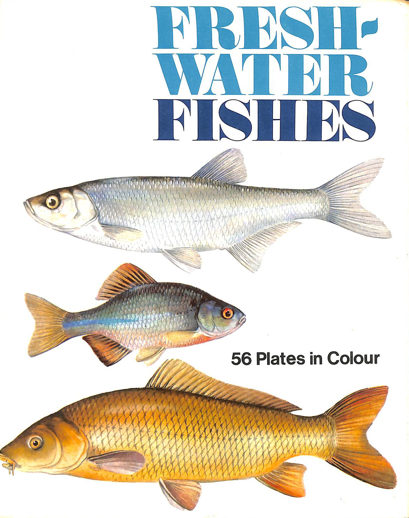Image for Freshwater Fishes