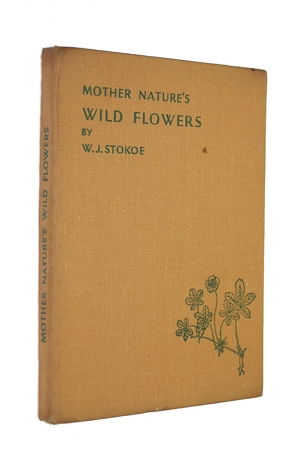 Image for Mother Nature'S Wild Flowers