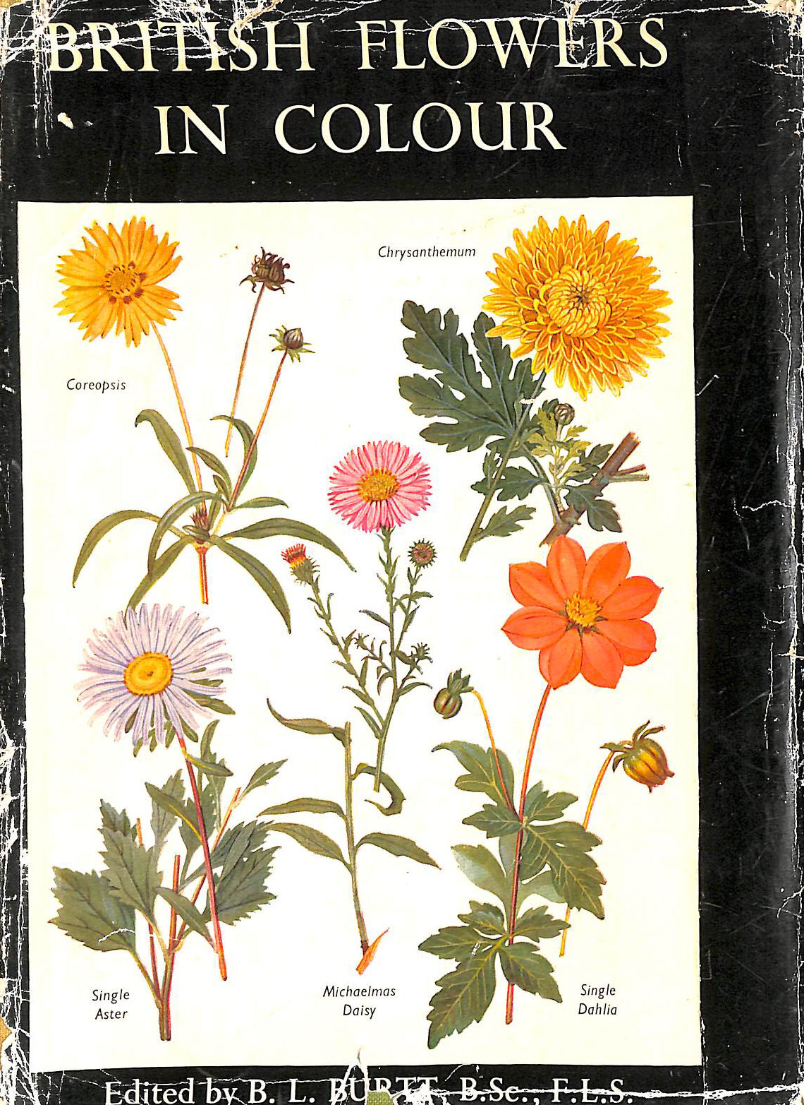 Image for British Flowers in Colour