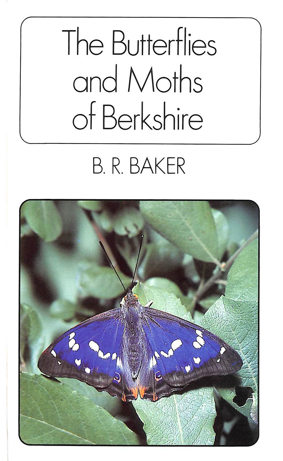 Image for Butterflies and Moths of Berkshire