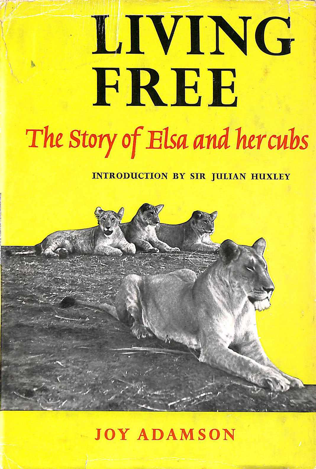 Image for Living Free: The Story of Elsa and Her Cubs