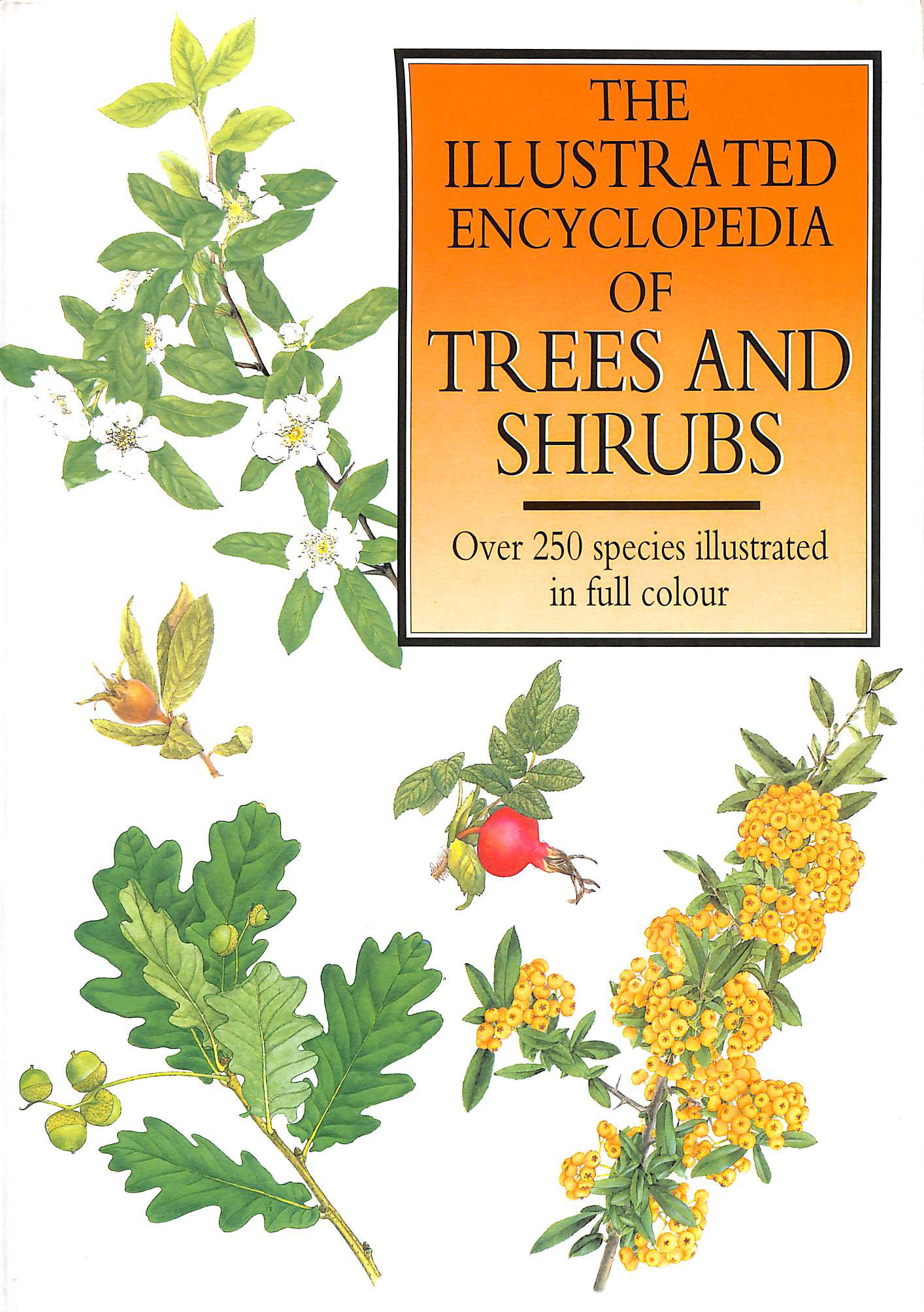 Image for The Illustrated Encyclopedia of Trees and Shrubs