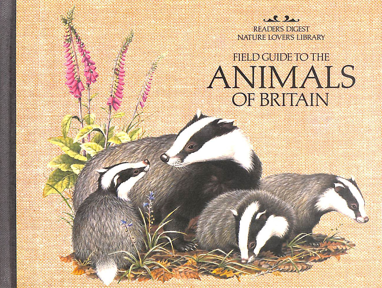 Image for Field Guide to the Animals of Britain